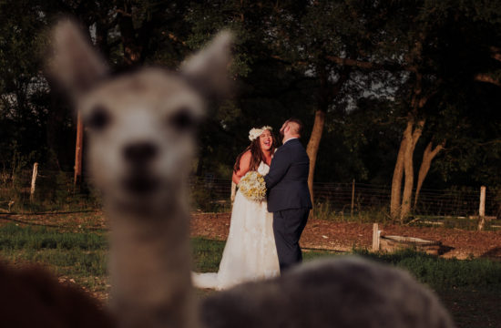 creative wedding portrait with alpaca
