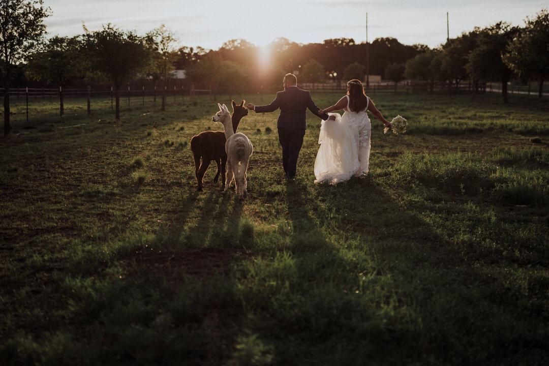 couple walking with alpacas